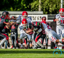 Week 11: Cougars wollen Rekord in Solingen